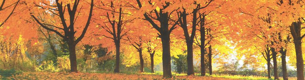 Baum Quelle: Botho Jenne